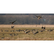Самарская область переносит сроки весенней охоты (северные районы)