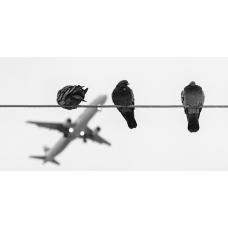 Безопасность самарского аэропорта обеспечат охотники